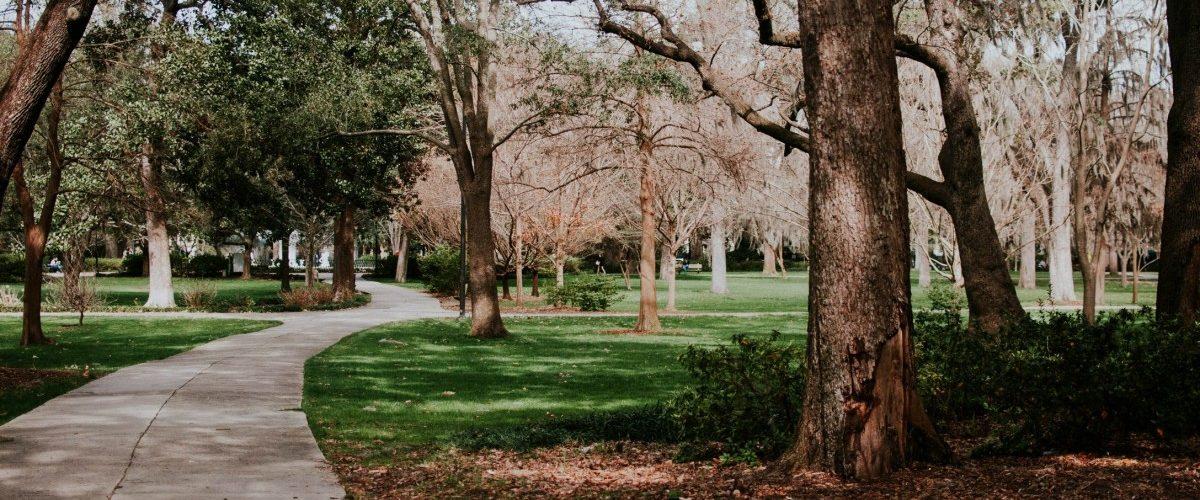 Impuls #34: Mache einen Spaziergang