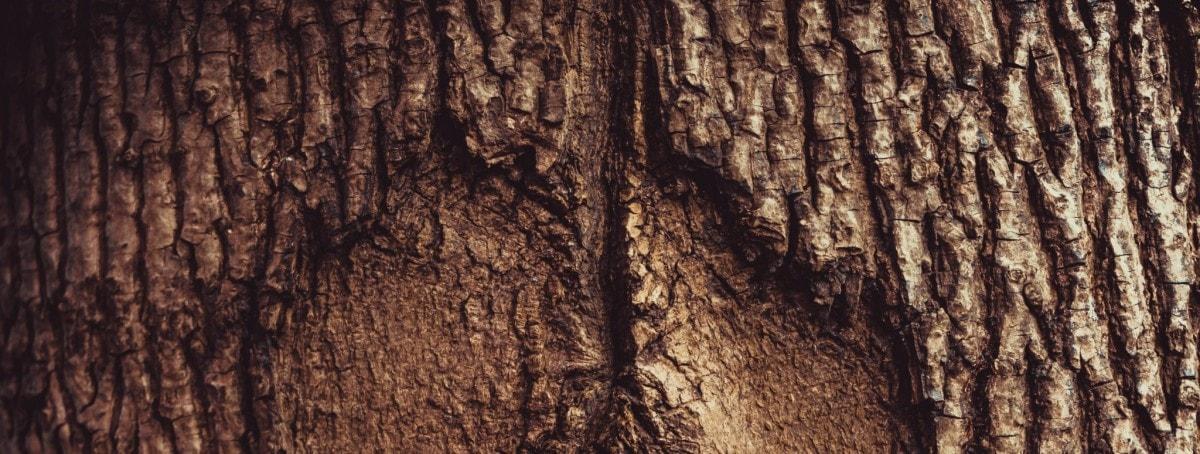 Impuls #12 – Berühre einen Baum